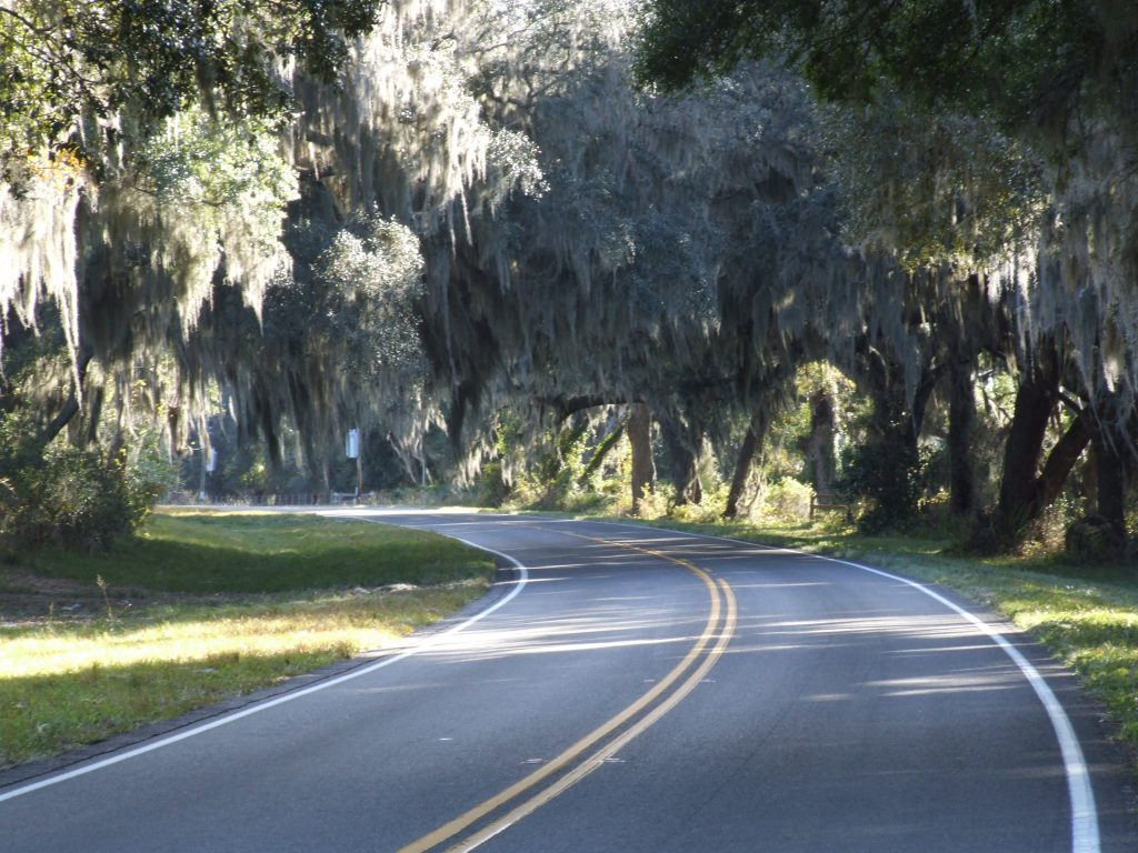 Image shows a curving roadway that is lined with trees with moss hanging from the branches.
